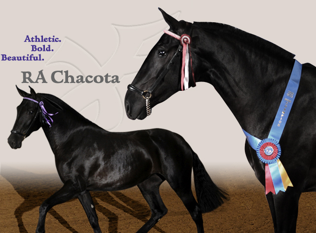 RA Chacota
